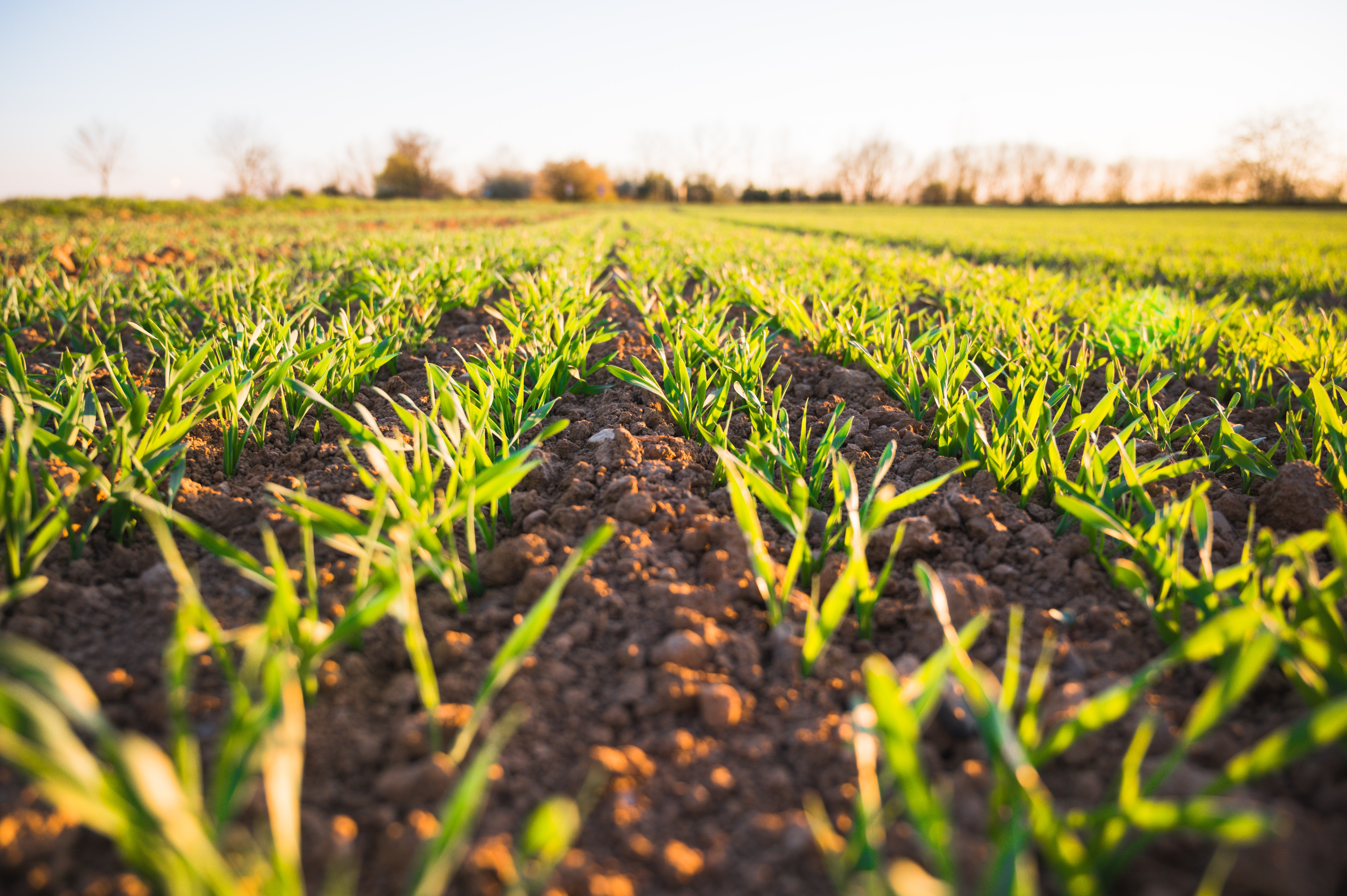 Cleantech in agriculture