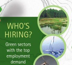 Infographic about hiring in the green sector