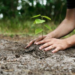 Close up of the ground with hands planting a seedling