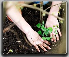 Environmental career profiles