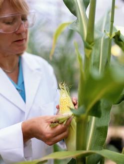 Growing STEM - Great Green Careers