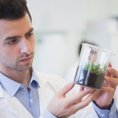 Man looking at soil sample in lab