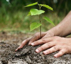 5-Things-About-Sustainability-Careers