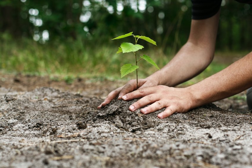 Image result for tree planting